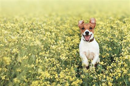 dog in flowers